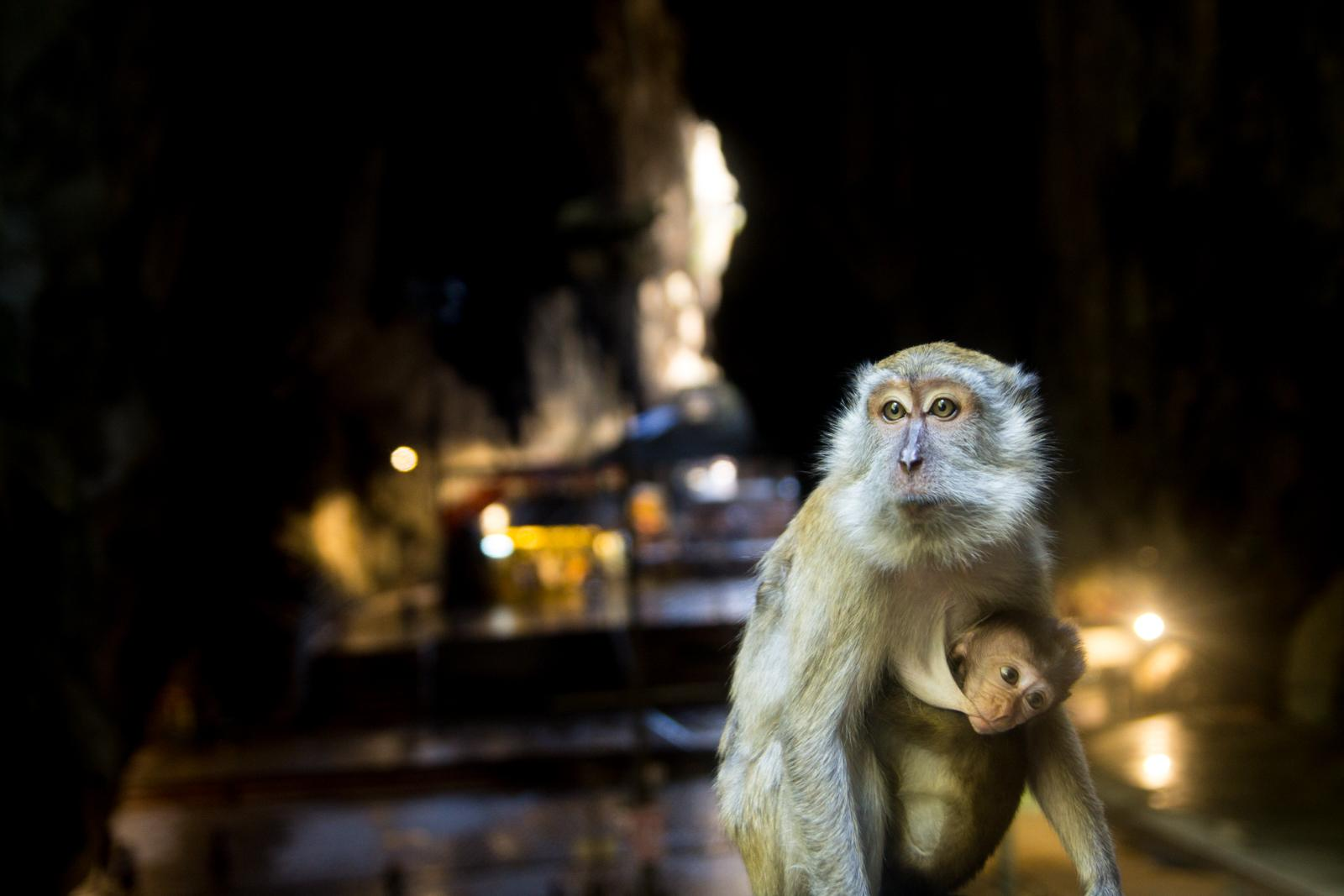 Monkeys at Batu Caves #1