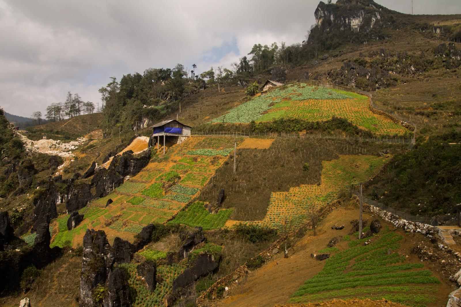 Farming in Sapa