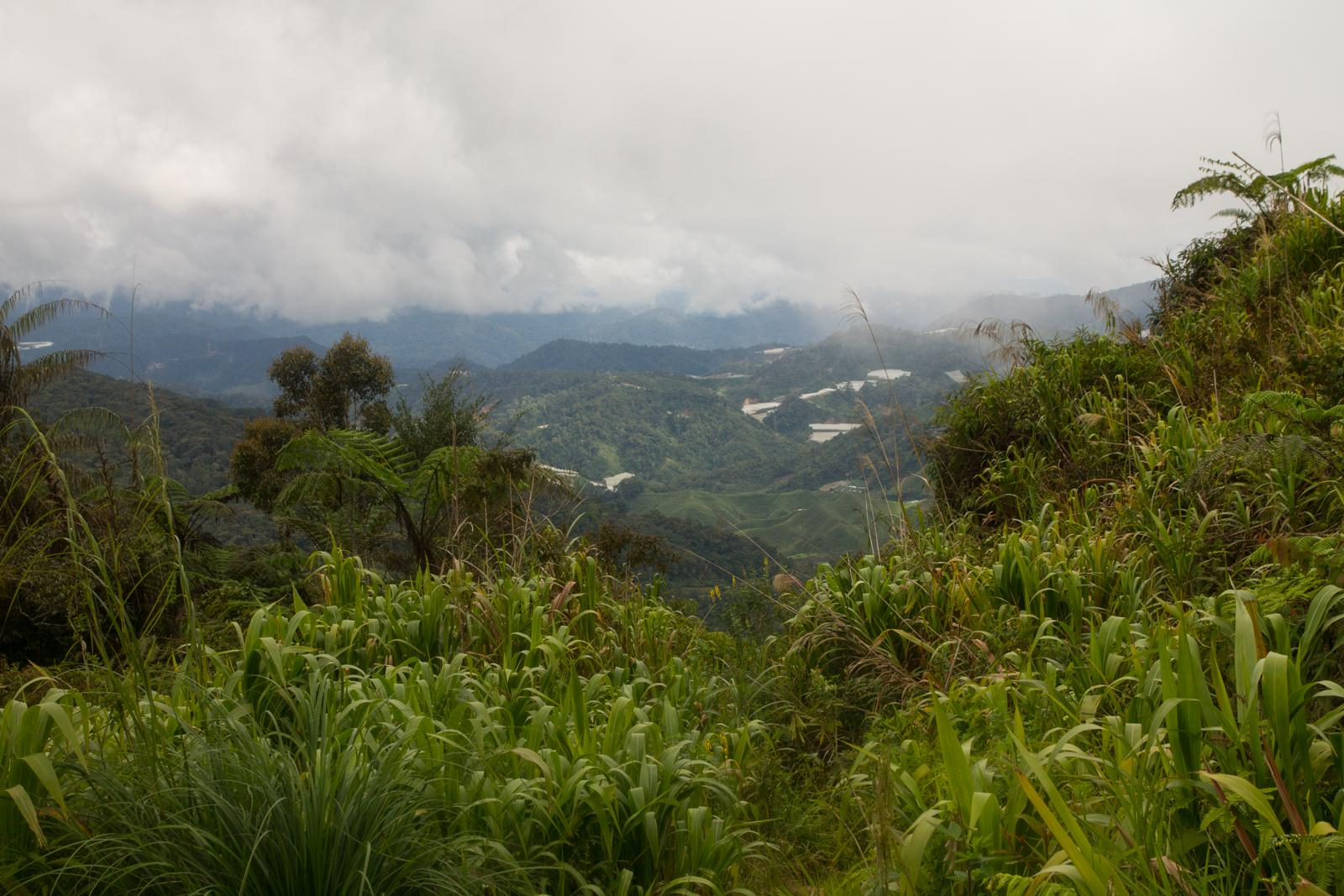 Cameron Highlands #2