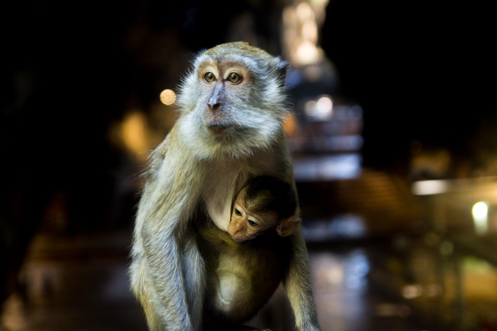 Monkeys at Batu Caves #2