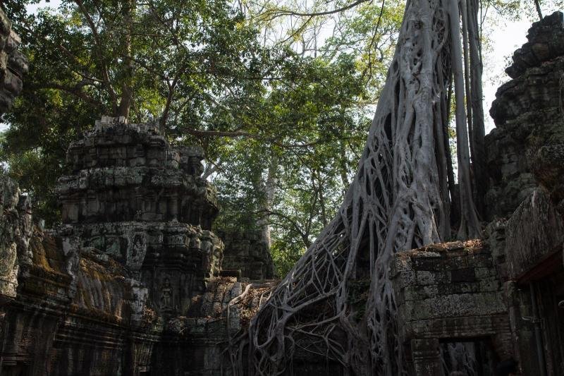 Temples of Angkor #2
