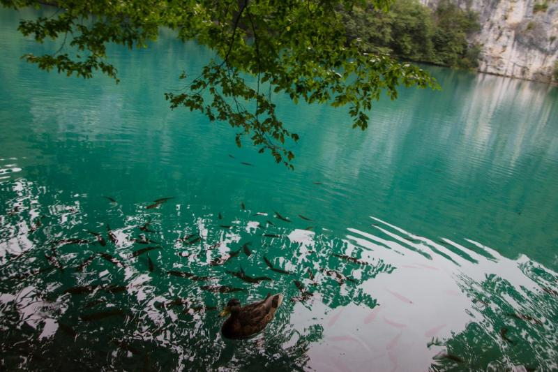 Amazing Water at Plitvice Lakes National Park